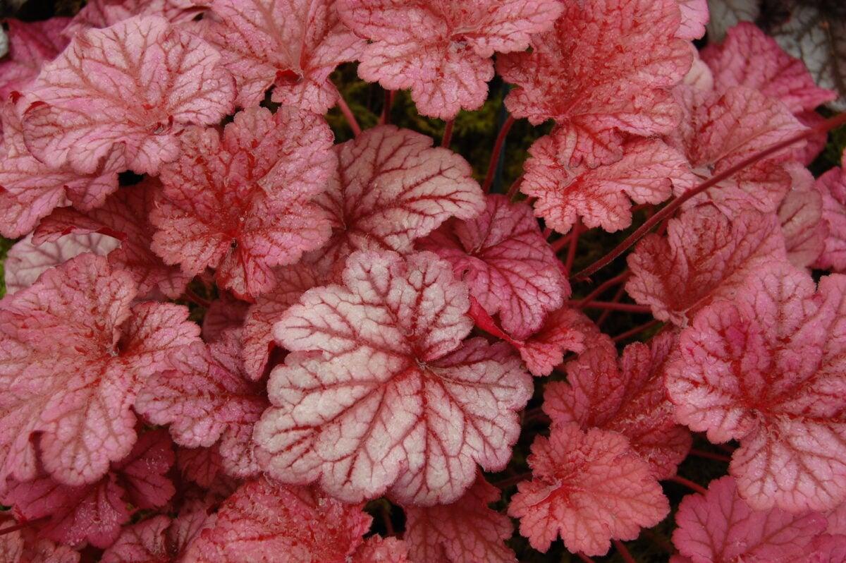 piante-adatte-afa-5