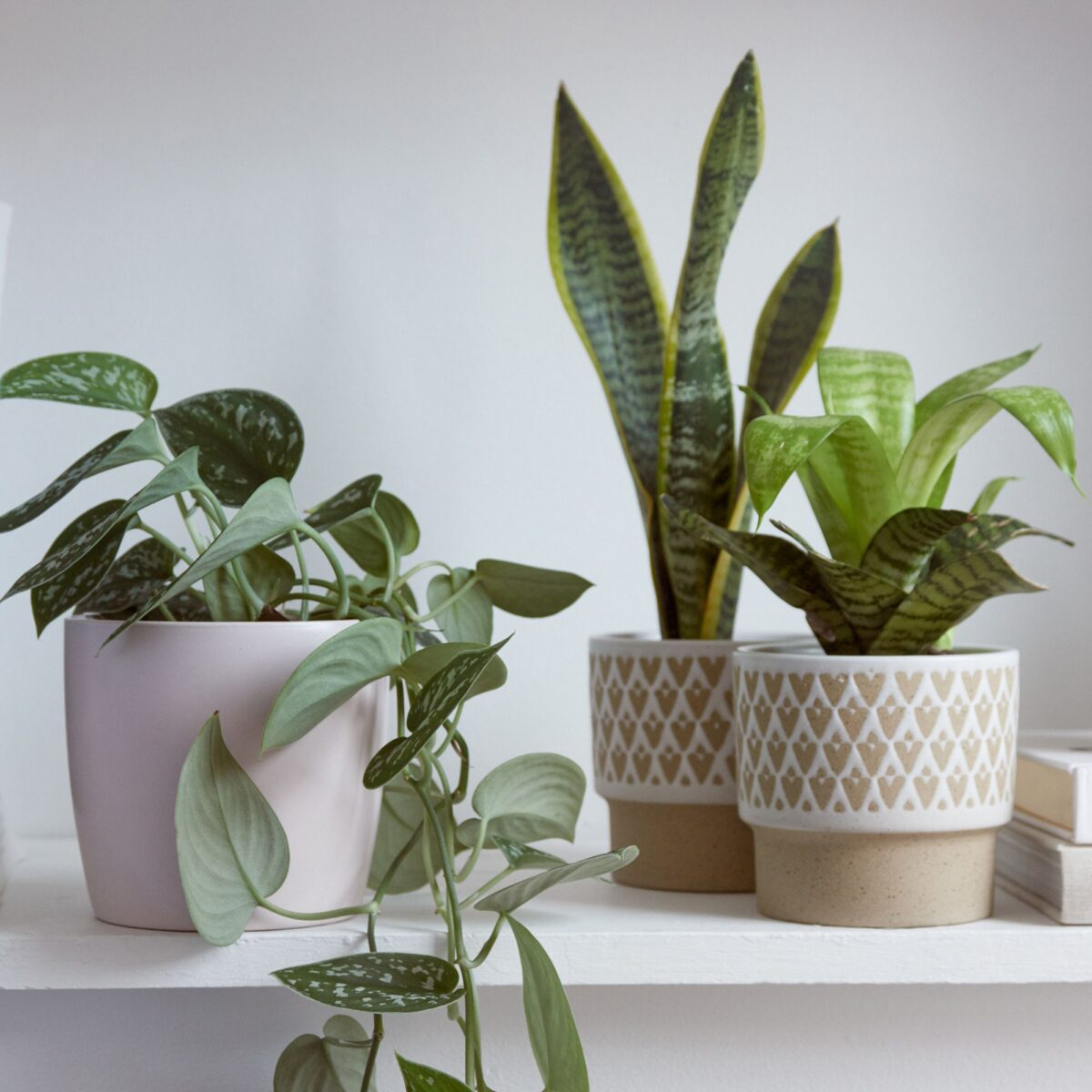 piante-da-avere-casa-novembre-2