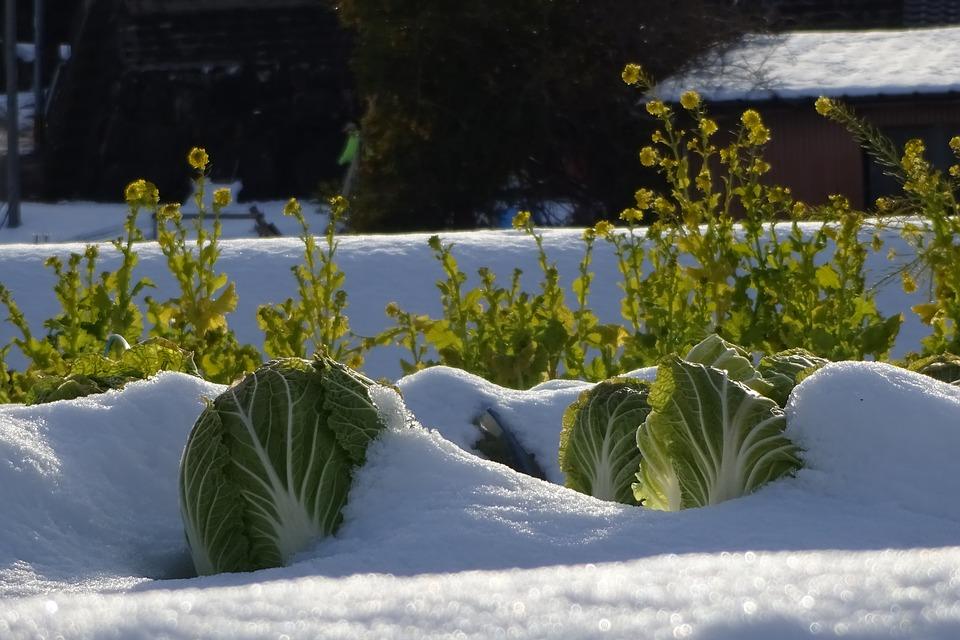 Orto-invernale
