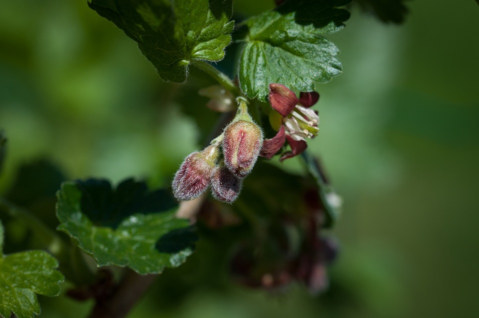 Josta-fiori