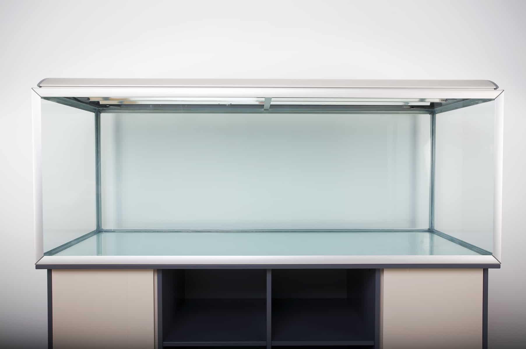 acquario-piranha-allestimento-i-primi-passi-5