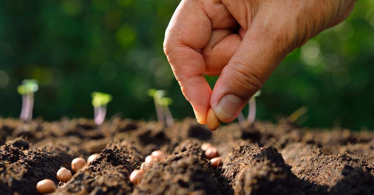 lavori-giardino-arrivo-primavera-semina1