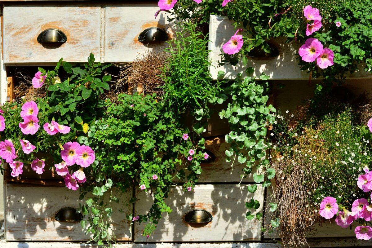 Petunia-grandiflora