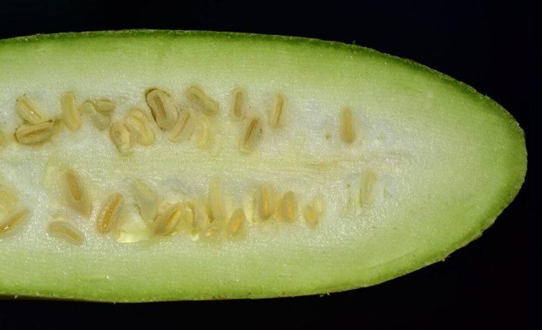 Zucca-lunga-bianca