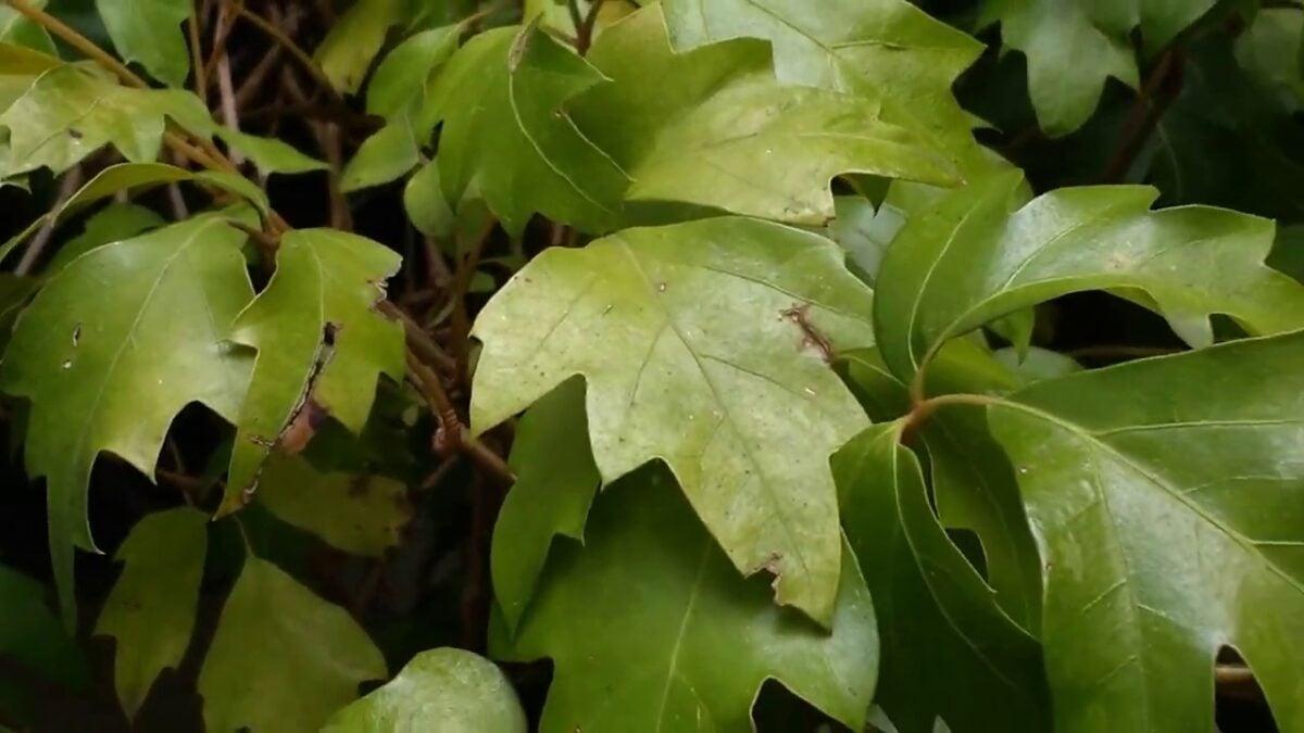 piante-ricadenti-casa-cisso
