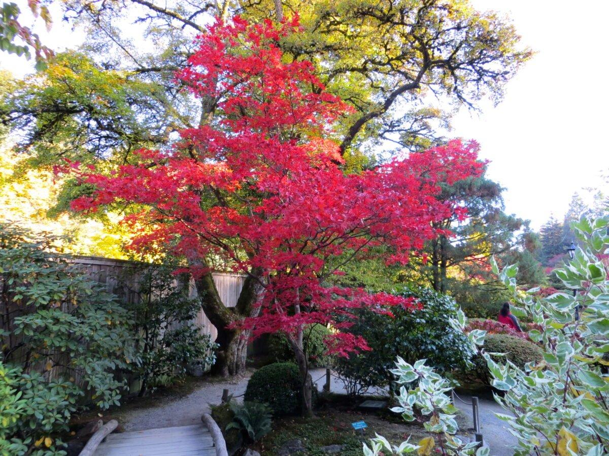 gli-alberi-da-giardino-meno-invasivi-12