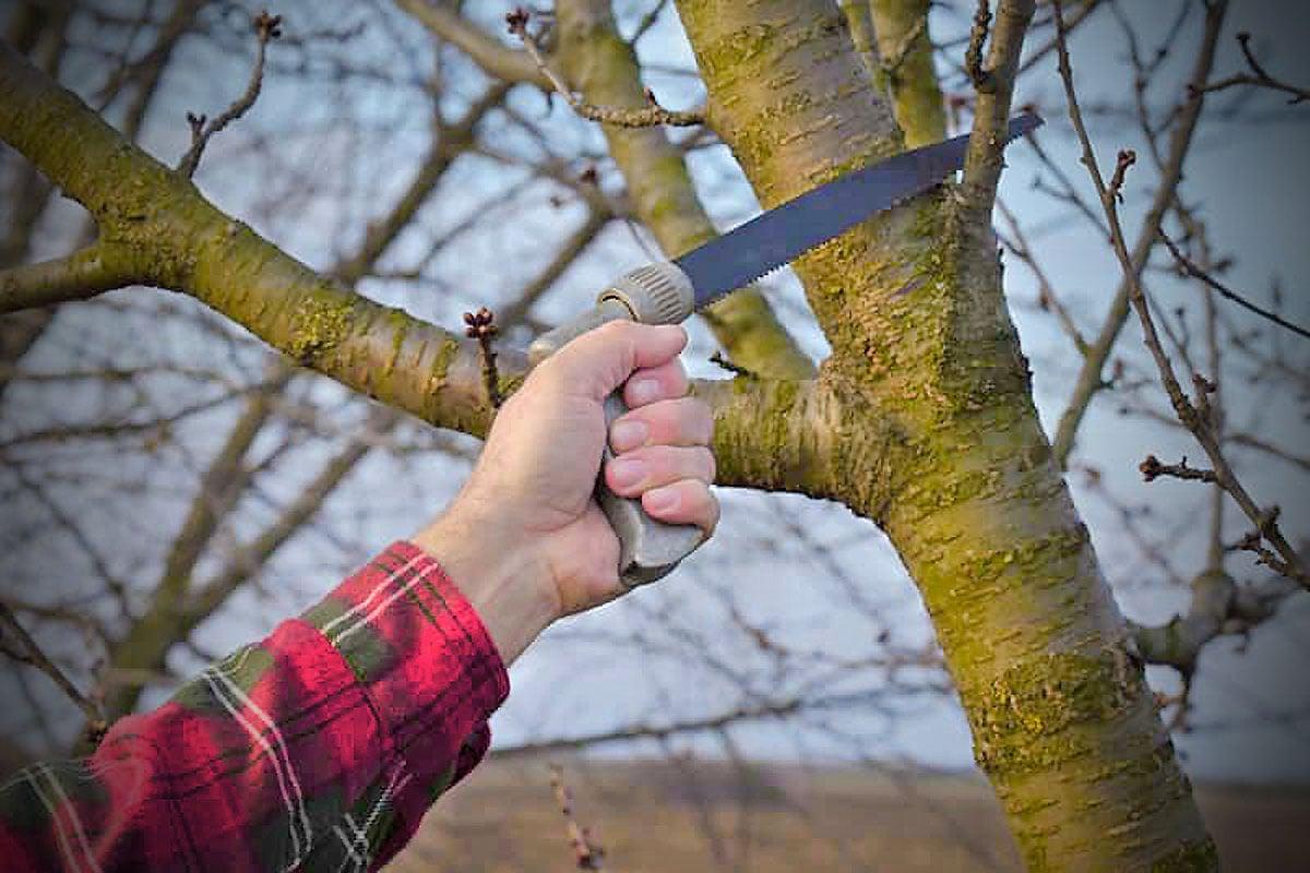 gli-alberi-da-giardino-meno-invasivi-17