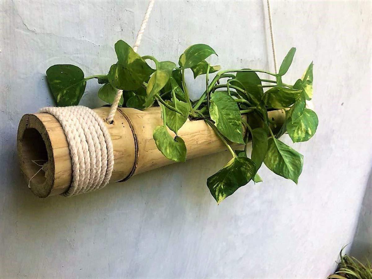 arredare-casa-bambu-giardino-piante