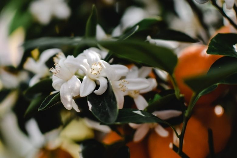 fiori-per-bouquet-sposa (2)